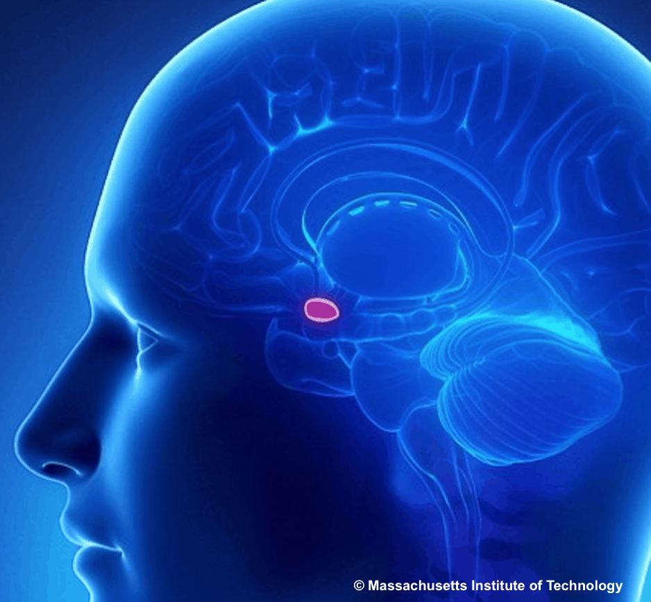 """La """"precision medicine"""" applicabile alla cura della depressione?"""