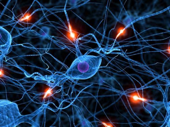 Il trapianto di neuroni embrionali può riparare lesioni nel cervello