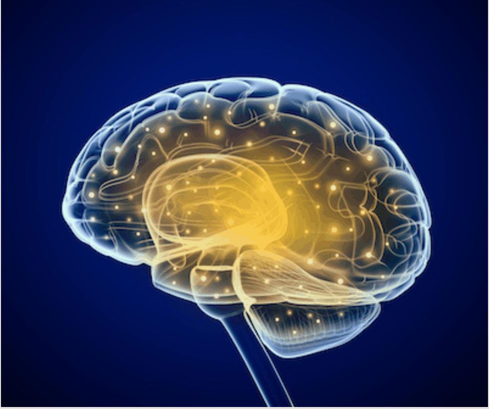 """Quali cambiamenti genetici ci hanno regalato il """"cervello umano""""?"""